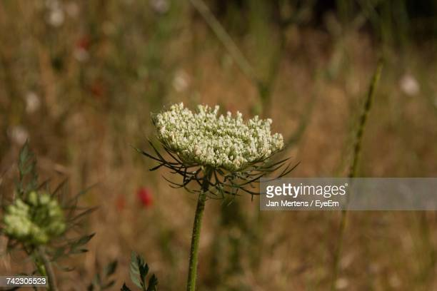 close-up of plant growing in field - mertens stock pictures, royalty-free photos & images