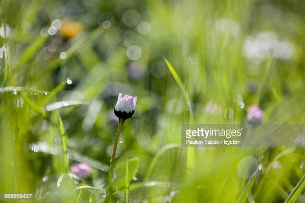 close-up of plant growing on field - paulien tabak stock pictures, royalty-free photos & images