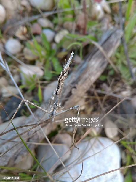close-up of plant growing on field - nadal stock pictures, royalty-free photos & images