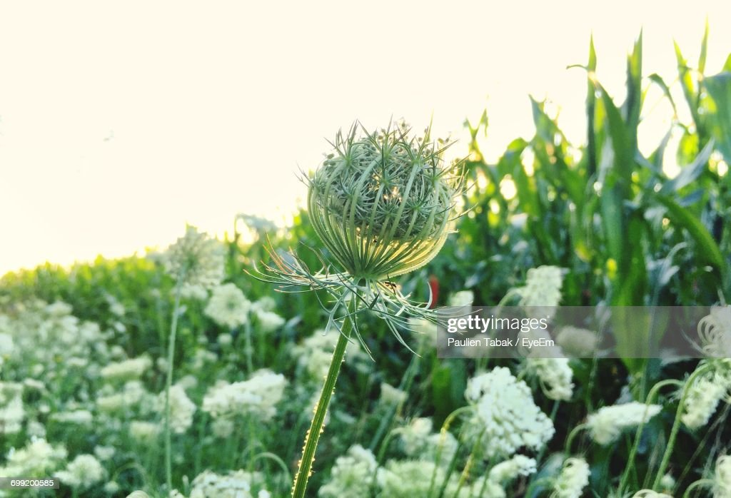 Close-Up Of Plant Growing On Field : Stockfoto