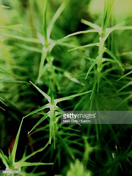 close-up of plant growing on field - mark duffy stock photos and pictures