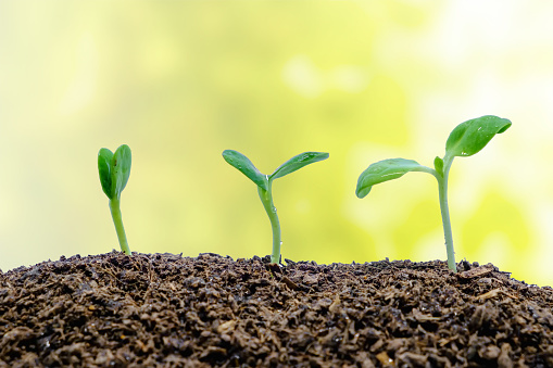 Close-Up Of Plant Growing On Field - gettyimageskorea
