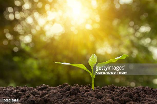 close-up of plant growing on land - seedling stock pictures, royalty-free photos & images