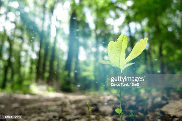 close-up of plant growing on land - ecosystem stock pictures, royalty-free photos & images