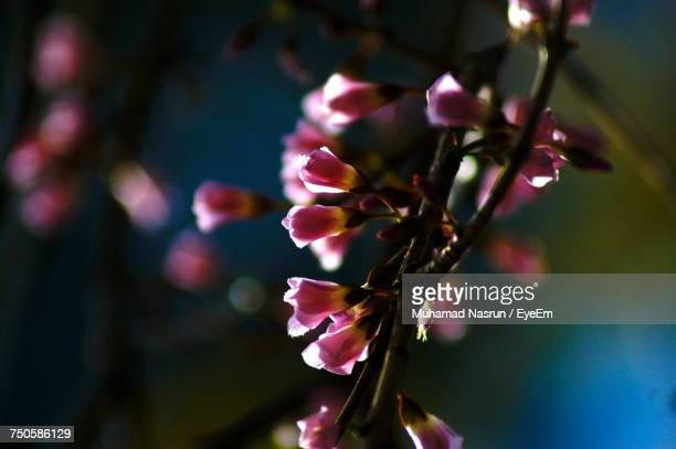 close-up of plant growing outdoors - muhamad nasrun stock pictures, royalty-free photos & images