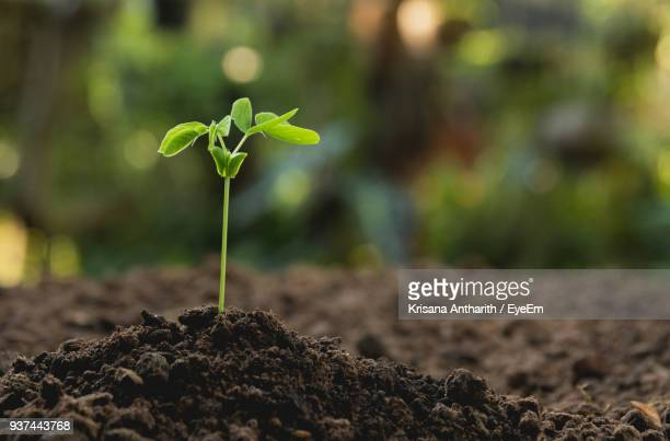close-up of plant growing outdoors - sapling stock photos and pictures