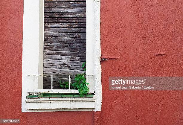 Close-Up Of Plant Growing Through Boarded Window
