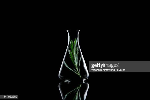 close-up of plant in conical flask against black background - フラスコ ストックフォトと画像