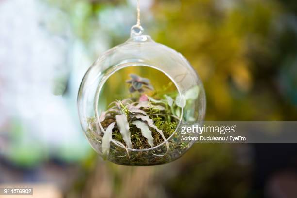 close-up of plant in glass container - adriana duduleanu stock photos and pictures