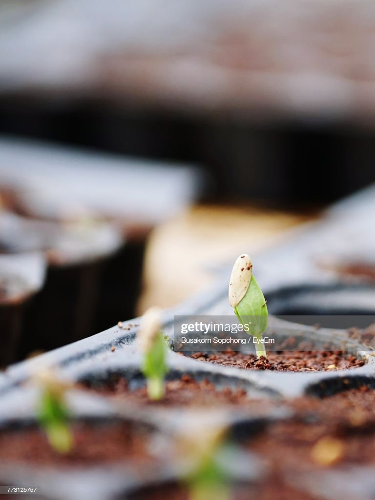 Close-Up Of Plant In Seedling Tray : Photo