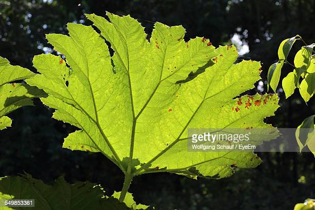 close-up of plant leaves during sunny day - massa stock pictures, royalty-free photos & images
