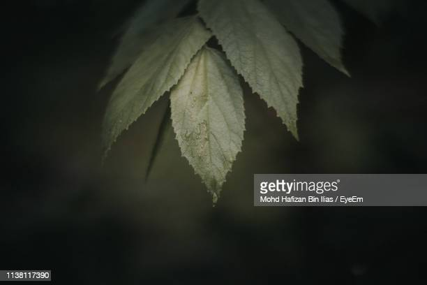 close-up of plant leaves during winter - chilly bin stock photos and pictures