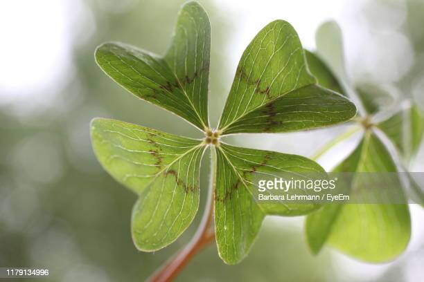 close-up of plant leaves - allegory painting stock pictures, royalty-free photos & images