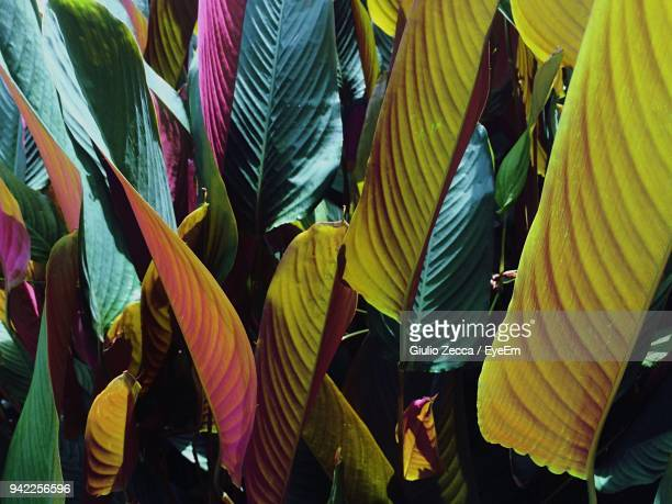 close-up of plant leaves - tropical tree stock pictures, royalty-free photos & images
