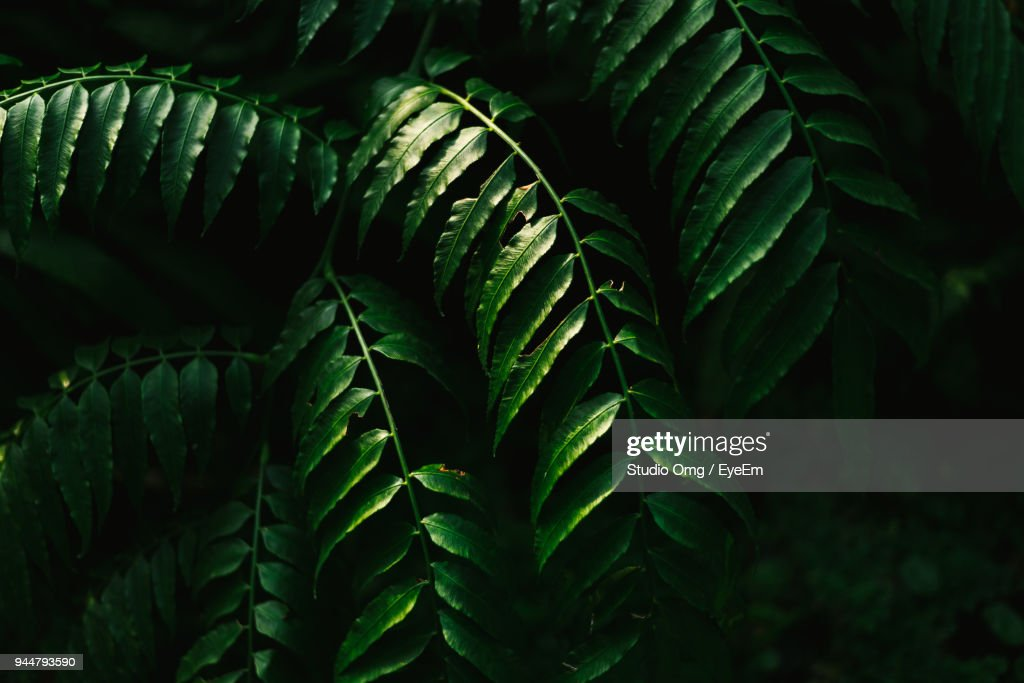 Close-Up Of Plant Leaves : Stock Photo