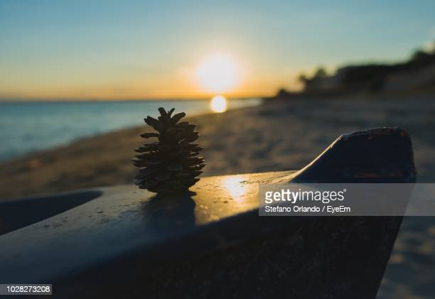 close-up of plant on beach against sky during sunset - special:whatlinkshere/file:lucerne_circle,_orlando,_fl.jpg stock pictures, royalty-free photos & images
