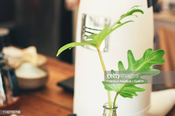 close-up of plant on table at home - at home ストックフォトと画像