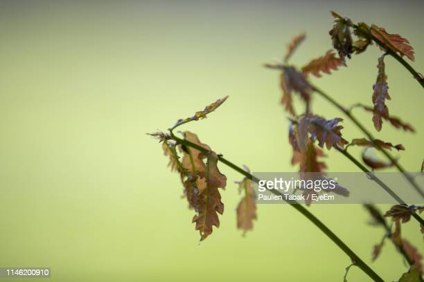 close-up of plant on twig - paulien tabak stock pictures, royalty-free photos & images