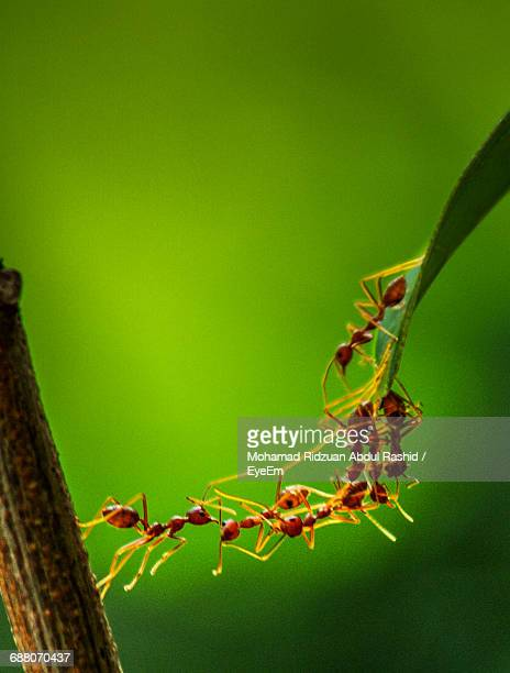close-up of plant - ants stock pictures, royalty-free photos & images