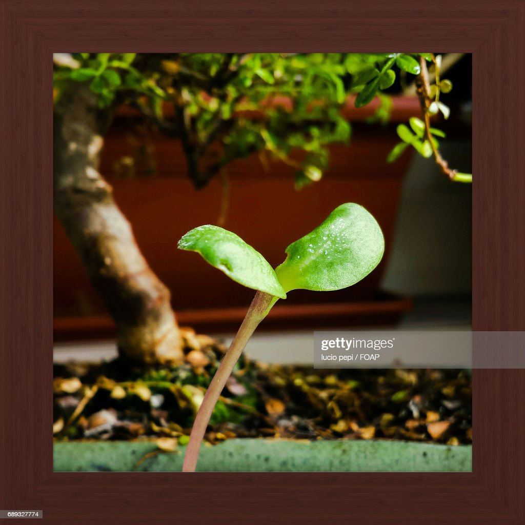 Close-up of plant : Stock Photo