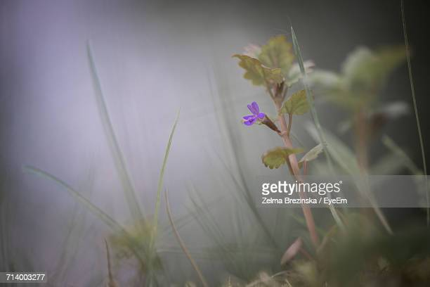 close-up of plant - brezinska stock pictures, royalty-free photos & images