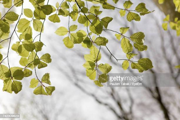 close-up of plant - paulien tabak stock pictures, royalty-free photos & images