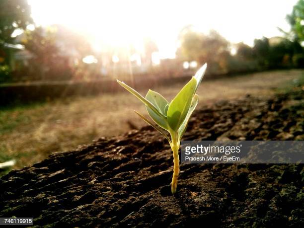 close-up of plant - seedling stock pictures, royalty-free photos & images
