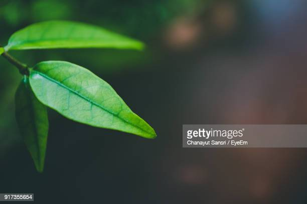 close-up of plant - chanayut stock photos and pictures