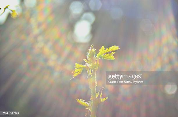 Close-Up Of Plant Shining In Sunlight
