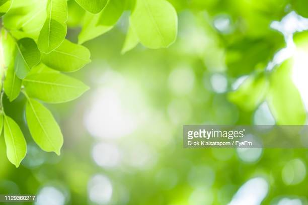 close-up of plants against blurred background - 後ろボケ ストックフォトと画像