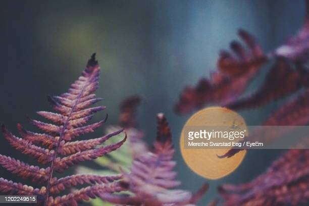 close-up of plants against blurred background - flower moon stock pictures, royalty-free photos & images