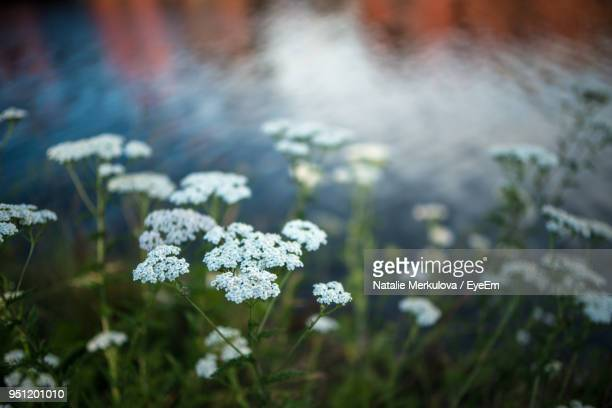 Close-Up Of Plants Against Blurred Water