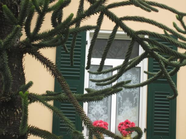 Close-Up Of Plants Against Building
