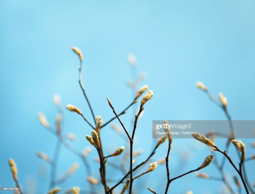 Close-Up Of Plants Against Clear Sky : Stockfoto