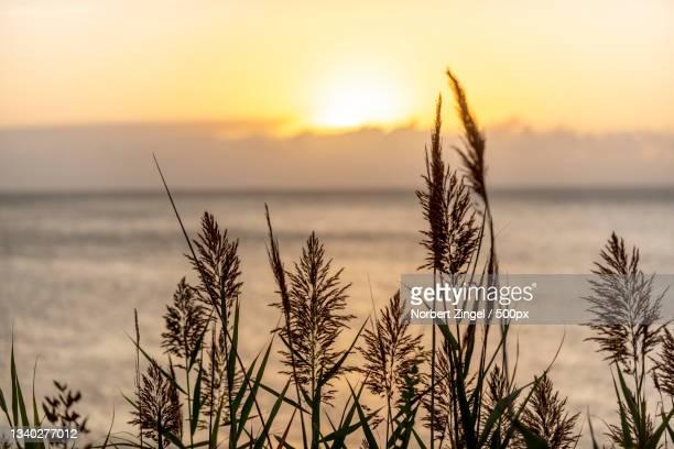 close-up of plants against sky during sunset,long island,new york,united states,usa - norbert zingel stock-fotos und bilder