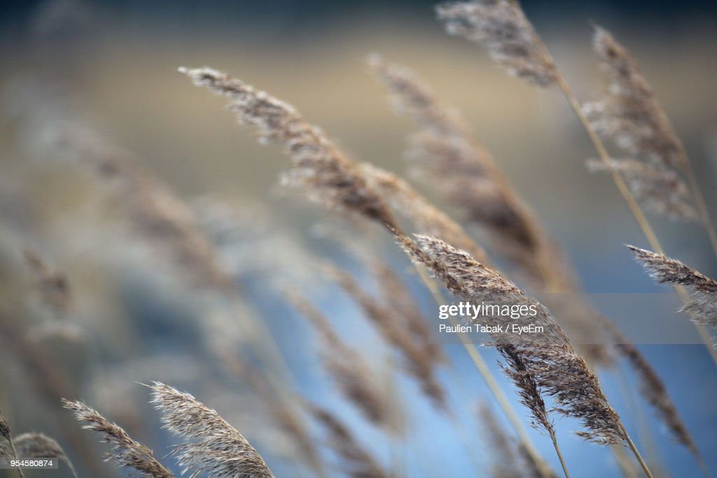 Close-Up Of Plants Against Sky During Winter : Stock Photo