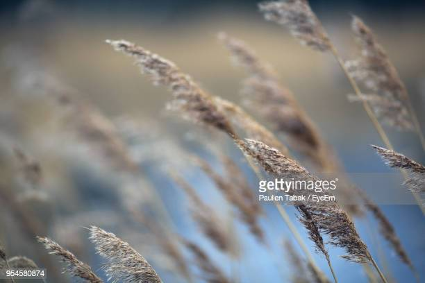 close-up of plants against sky during winter - paulien tabak stock-fotos und bilder