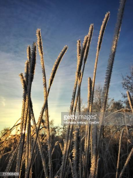 close-up of plants against sky - anfang stock pictures, royalty-free photos & images