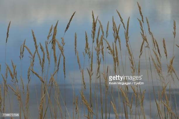close-up of plants against sky - county fermanagh stock photos and pictures
