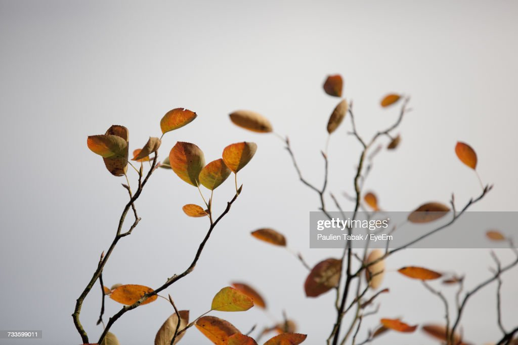 Close-Up Of Plants Against Sky : Stock Photo