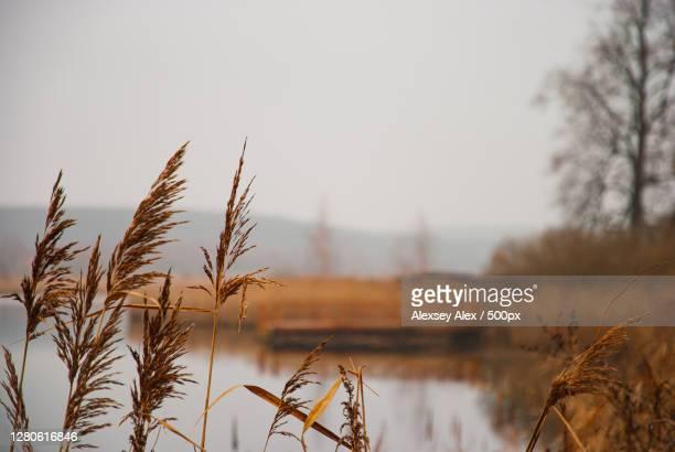 close-up of plants against sky,vyksa,nizhny novgorod oblast,russia - ニジニ・ノヴゴロド州 ストックフォトと画像