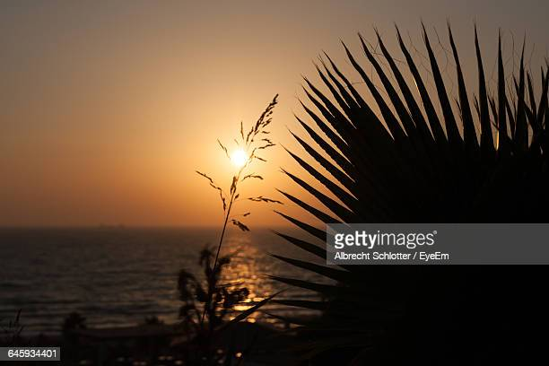close-up of plants against sunset - albrecht schlotter stock photos and pictures