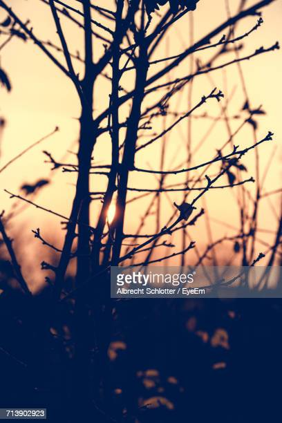 close-up of plants against sunset - albrecht schlotter stock pictures, royalty-free photos & images