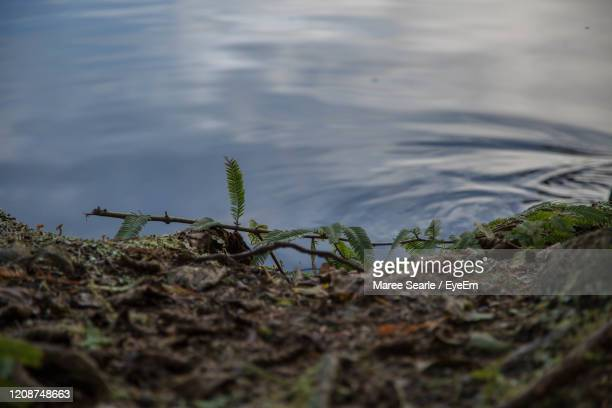 close-up of plants against water - cambridge new zealand stock pictures, royalty-free photos & images