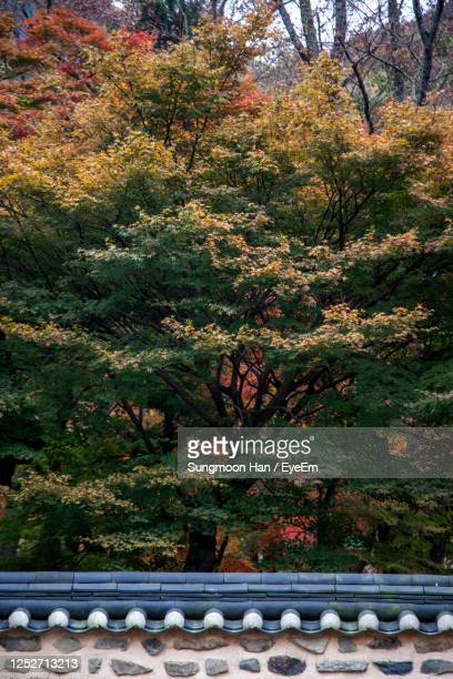 close-up of plants and trees during autumn - jeonju stock pictures, royalty-free photos & images