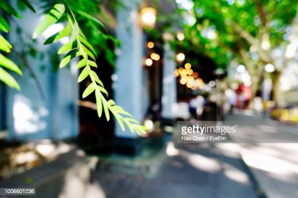 close-up of plants by road in city - focus on foreground stock pictures, royalty-free photos & images