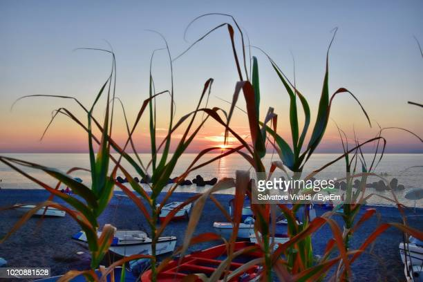 close-up of plants by sea against sky during sunset - vivaldi salvatore foto e immagini stock