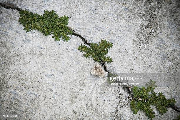 close-up of plants developed in cracked concrete wall - moss stock pictures, royalty-free photos & images