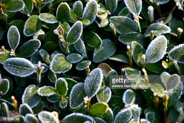 Close-Up Of Plants During Winter
