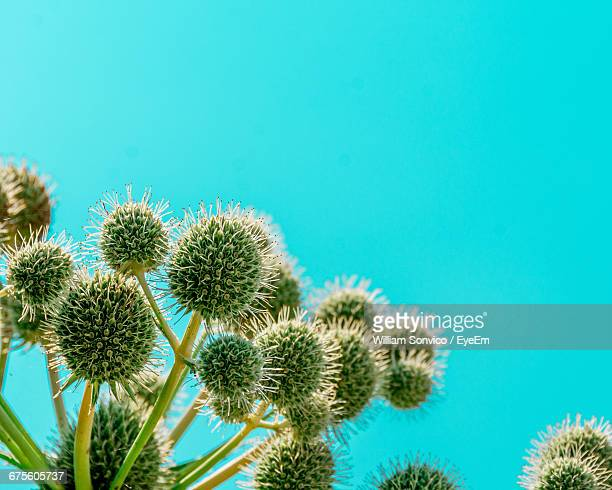 Close-Up Of Plants Growing Against Turquoise Sky